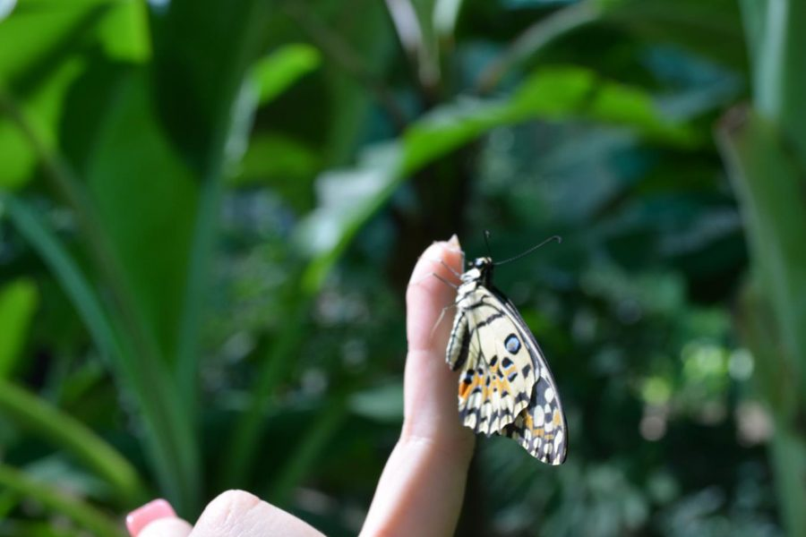 Tok Aman Bali Beach Resort Kelantan Mini Zoo Butterfly Farm