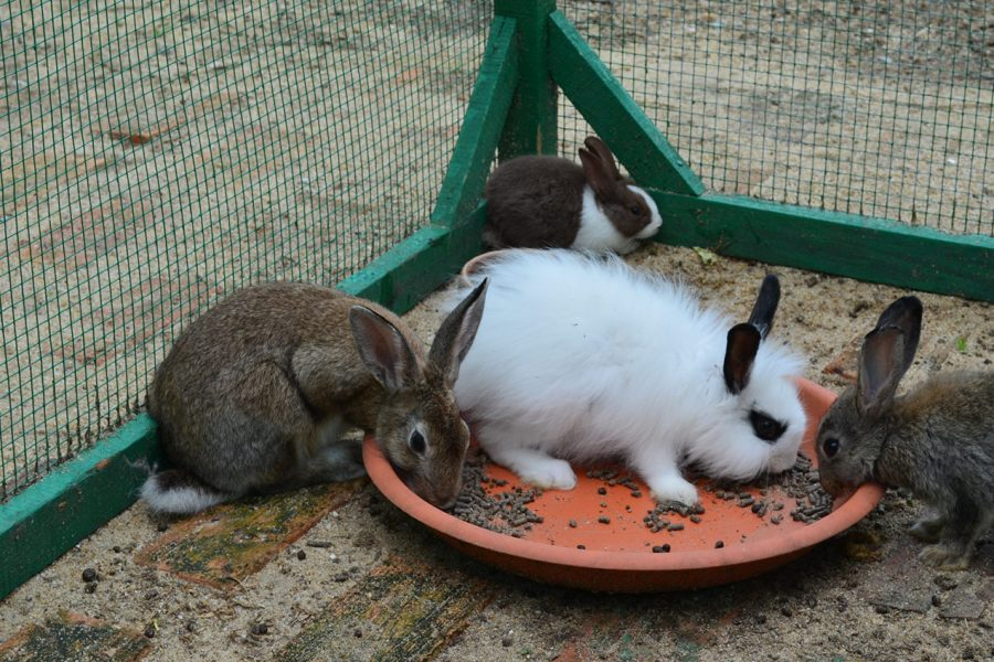 Tok Aman Bali Beach Resort Kelantan Mini Zoo Rabbit Farm